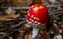 paddenstoelen-8